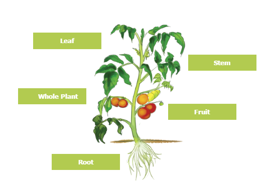 crop-select.PNG